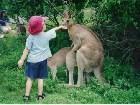 фото - Не хотите ль подкреп ... - В мире животных. Самые прикольные фотки про животных здесь