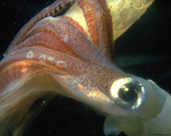 """Здесь представлен красочный фотоальбом """"Этот удивительный п В красочном фотоальбоме """"Этот удивительный подводный мир"""" есть очень много захватывающего и интерестного. Морские звёзды, крабы, рыбы, кораллы, морские растения и пейзажи дадут вам насладиться приятным просмотром данной фотогалереи."""