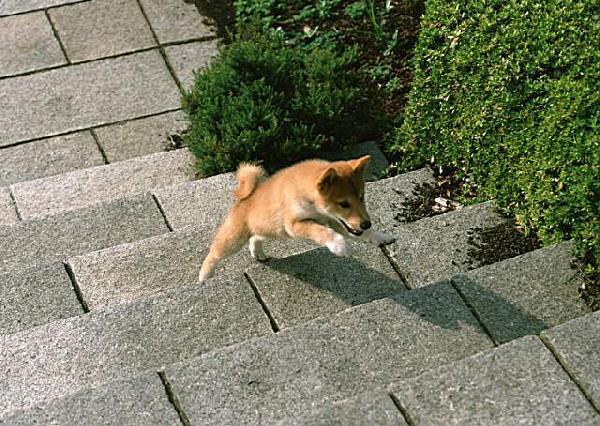 фото альбом Собачки Галлерея самых разнообразных собачат