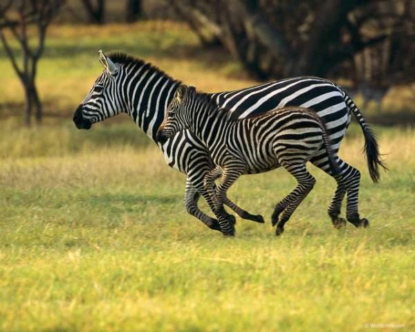 Здесь фотки африканских животных: cлоны, жирафы, носороги и Красочные фотки дикого мира африканских животных: слоны, жирафы, носороги и др.