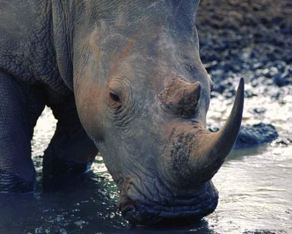 Здесь фото африканских животных: cлоны, жирафы, носороги и Красочные фото дикого мира африканских животных: слоны, жирафы, носороги и др.