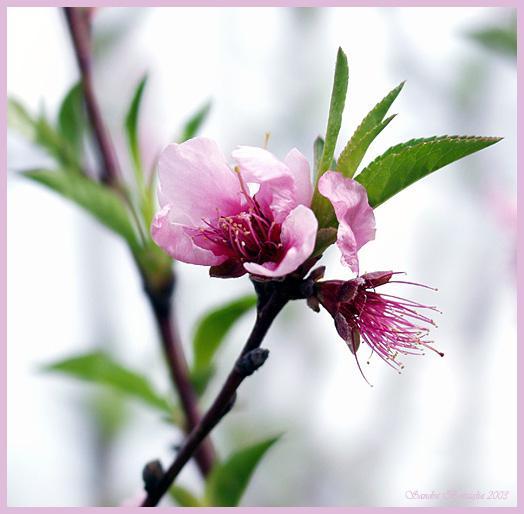 фото альбом Цветы