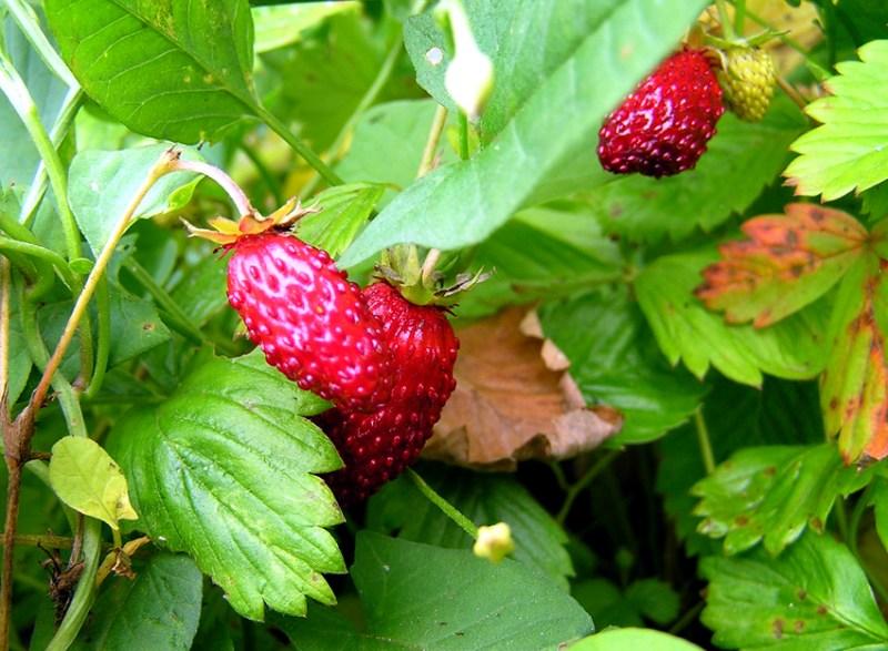 фото альбом Наш урожай фрукты, овощи и др.