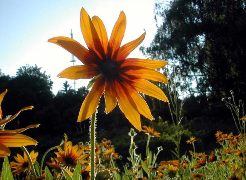 фото альбом Красивые цветочки флора Украины