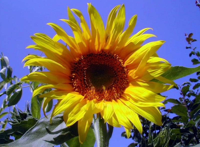 фотографии альбом Красивые цветочки флора Украины