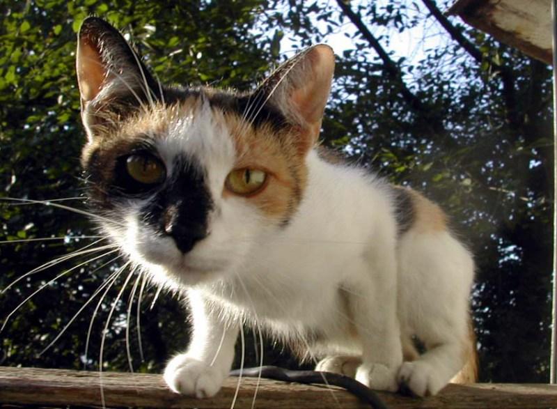 фото альбом Кошачья жизнь Ты кто?