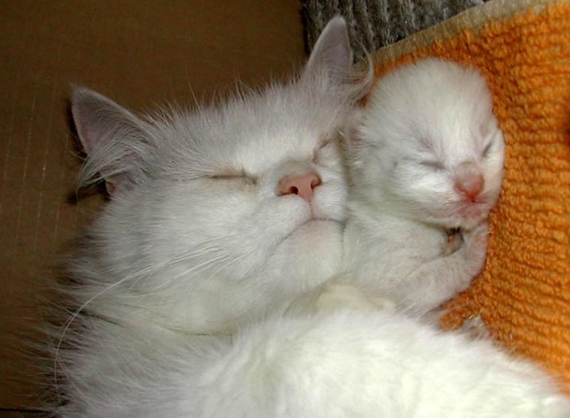 фотографии альбом Кошачья жизнь Радость материнства