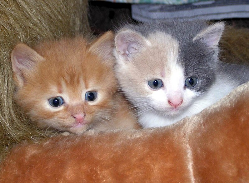фотографии альбом Кошачья жизнь Котята