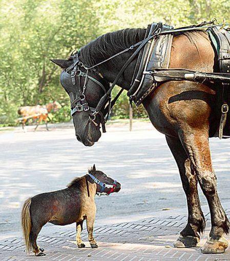 фотографии альбом Животные лошадка