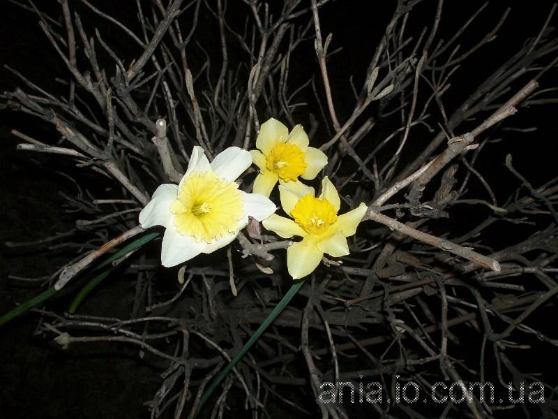 фото альбом Цветы, пейзажи