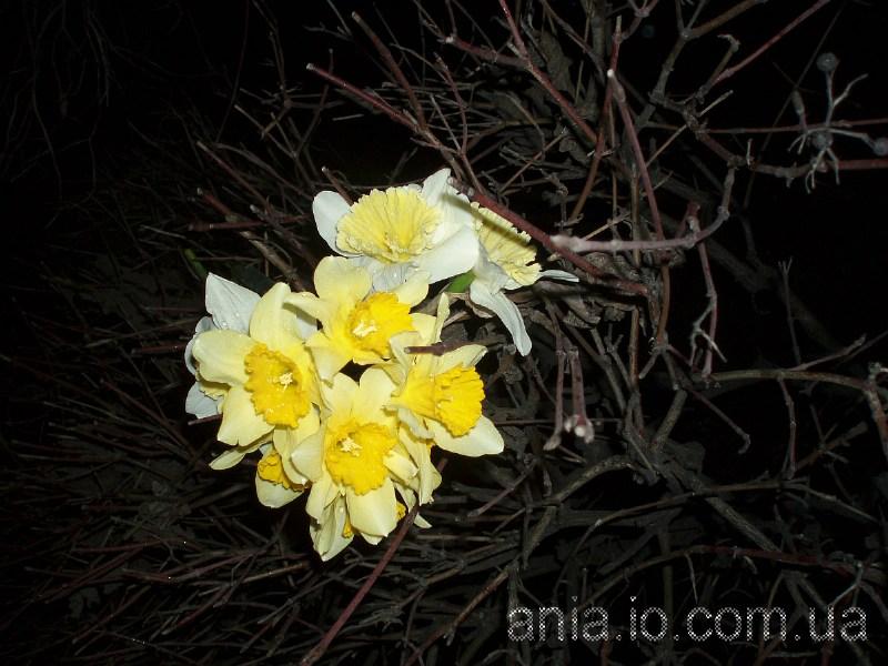 фотографии альбом Цветы, пейзажи