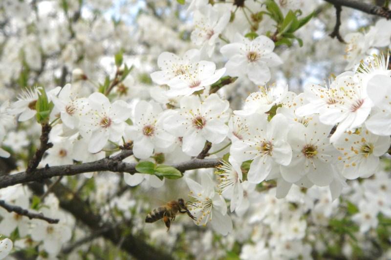 фото альбом Environment & Nature Пчела в полёте