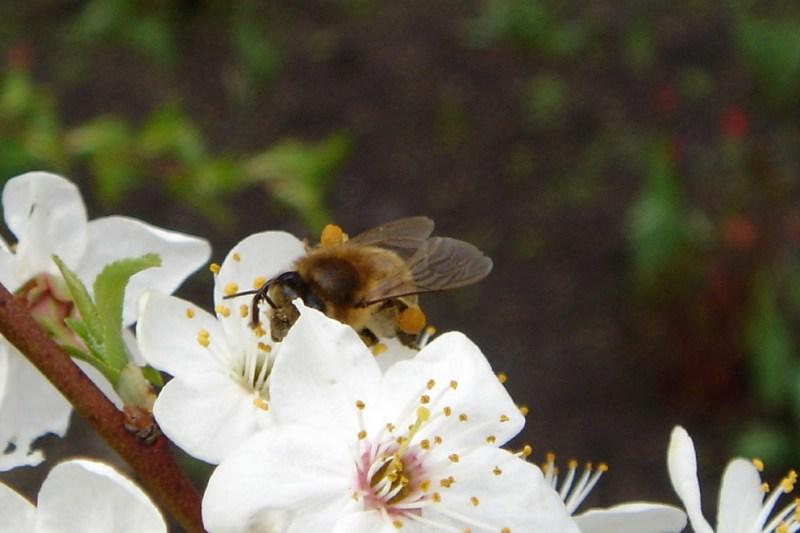 фотографии альбом Environment & Nature Пчела