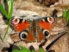 фото - Бабочка - Леса, озера - Наш лес 1