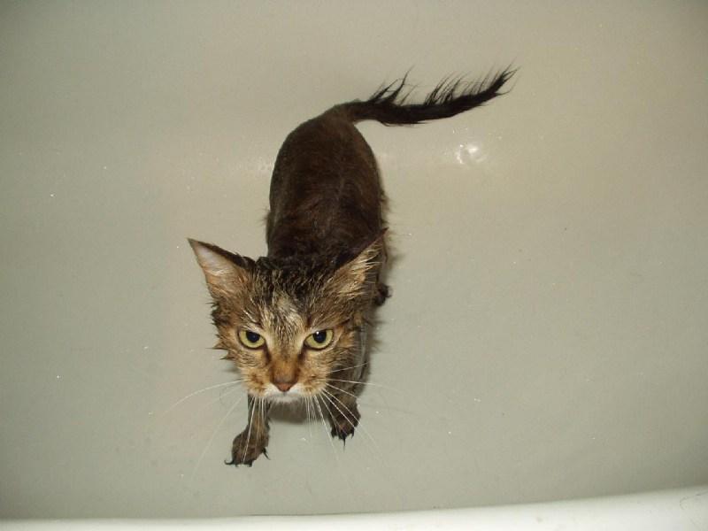 фото альбом Моя Кицька Пуся моя домашня тваринка, яку я дуже люблю