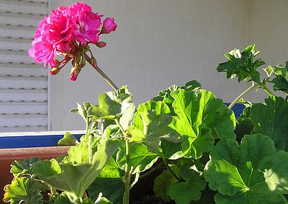 фотографии альбом Кімнатні рослини