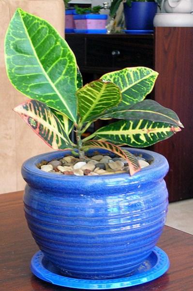 фото альбом Кімнатні рослини