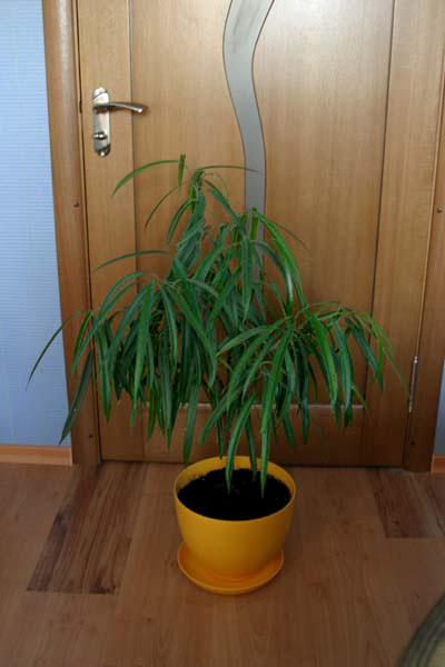 фото альбом Кімнатні рослини ($1575)