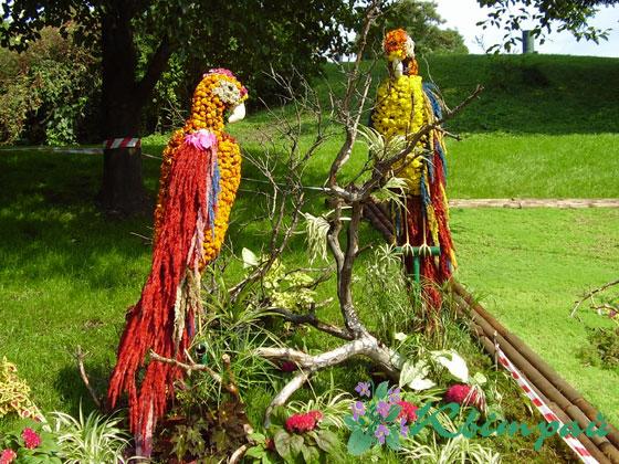фотографии альбом Праздники - Виставка Виставка квітів 24.08.2006