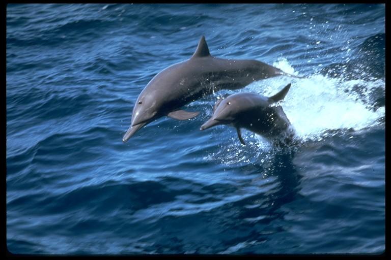 фото альбом марские животные марские животные мира