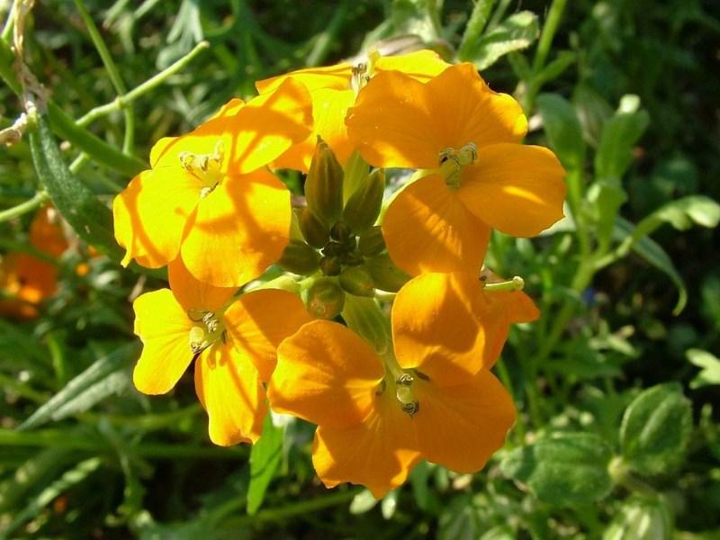 фото альбом цветы цветы мира