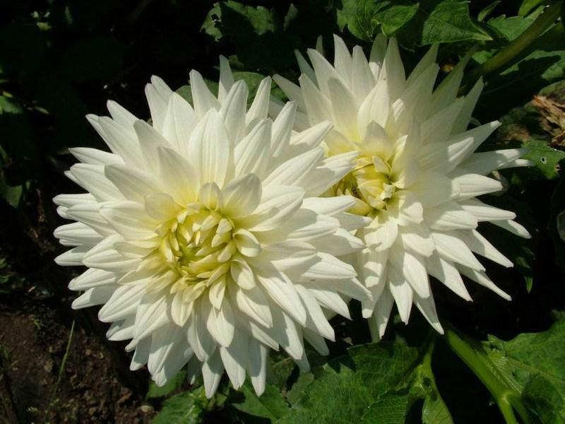 фотографии альбом цветы цветы мира