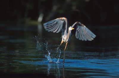 фото альбом природа природа жывотных