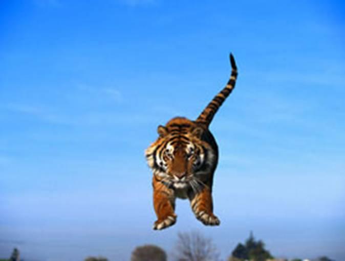 фото альбом природа природа жывотных в мире