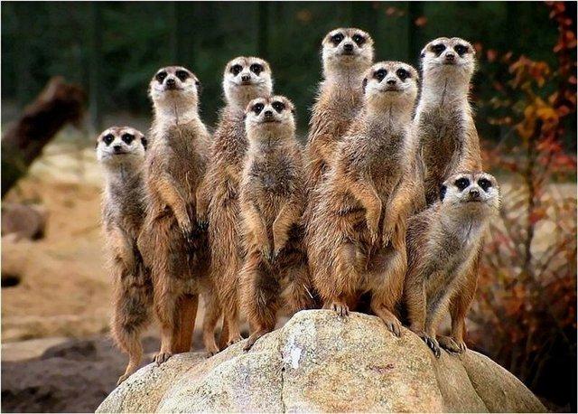 фото альбом Животные Такие забавные:)Не только дикие,но и домашние