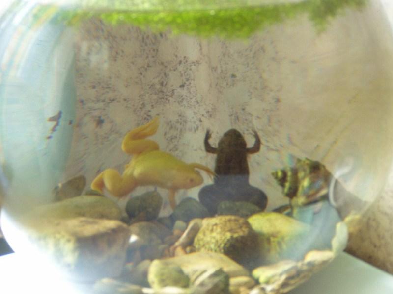 фото альбом Лягушки My Frog