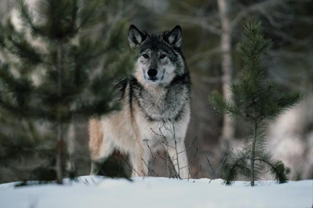 фото альбом Animals Животние Дикие Животние