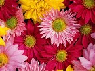 фото - flowers  Цветы - flowers Цветы