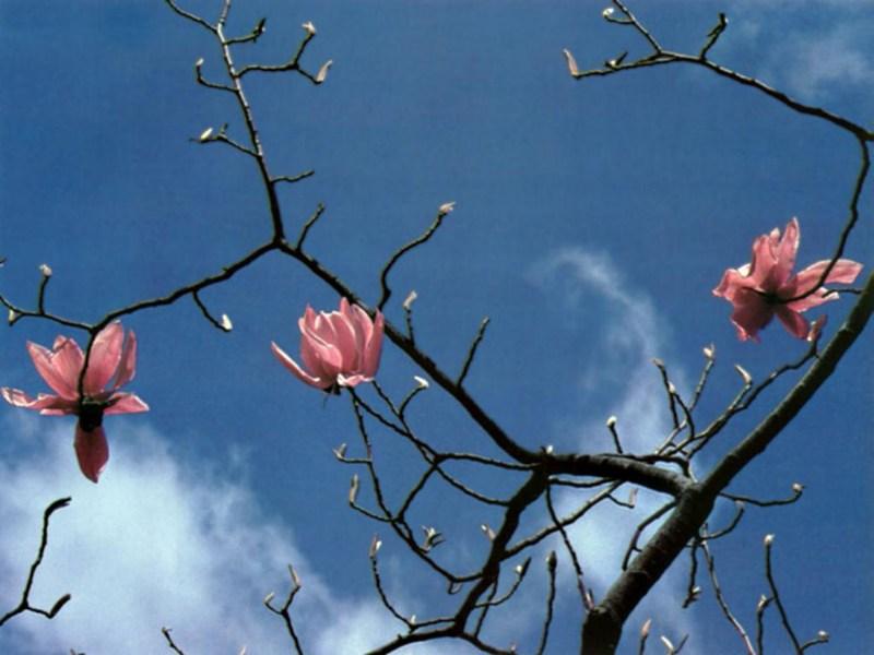 фотографии альбом flowers Цветы flowers  Цветы