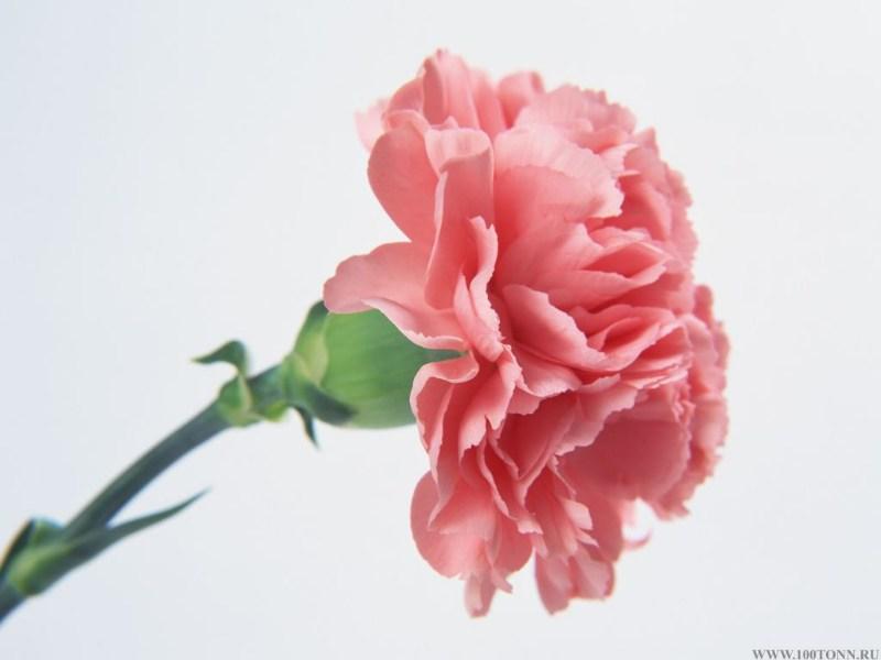 фото альбом flowers Цветы flowers  Цветы
