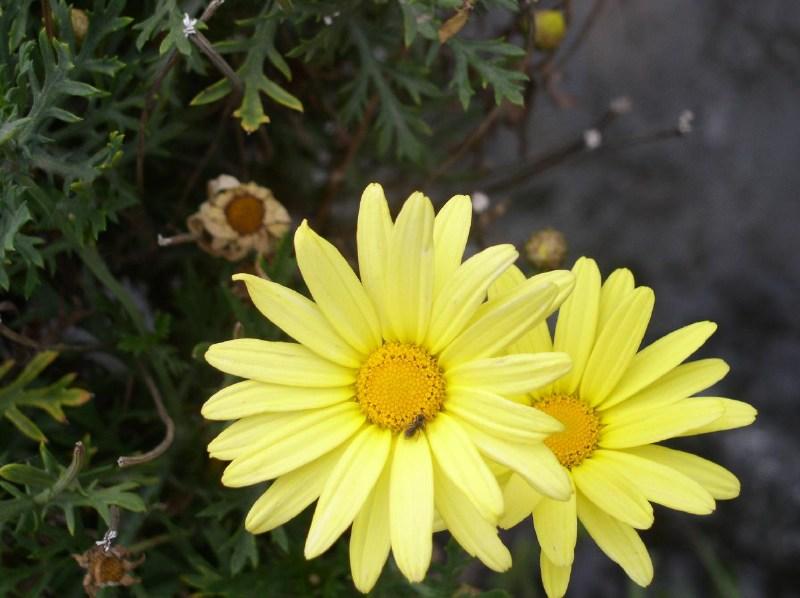 фото альбом Растительный мир Перу