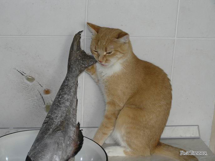 фото альбом Домашнее животное Хоть хвостик! (2)