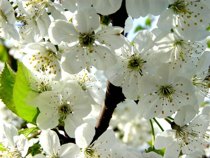 фотографии альбом Цветы Макро