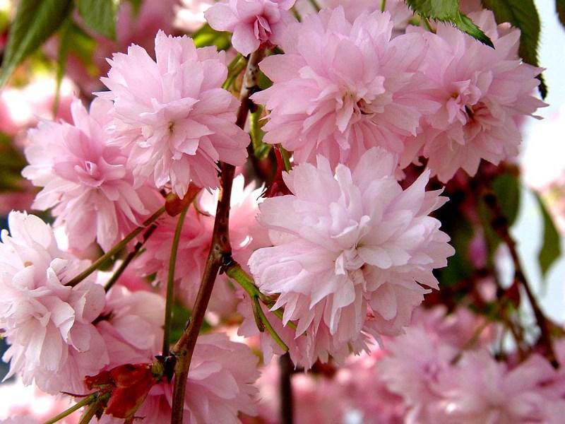 фото альбом Цветы Макро