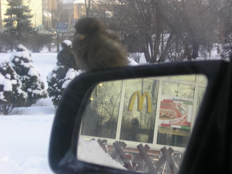 фото альбом Киев - Киев и предместья -23 грд. С. Воробей на зеркале с обогревом