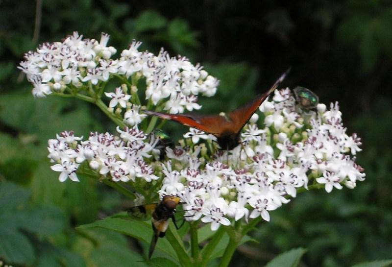 фото альбом Насекомые и растения Точка сбора: шмель, бабочка и два жука