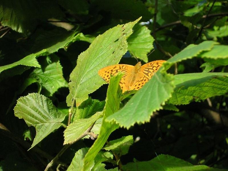 фото альбом Насекомые и растения Бабочка