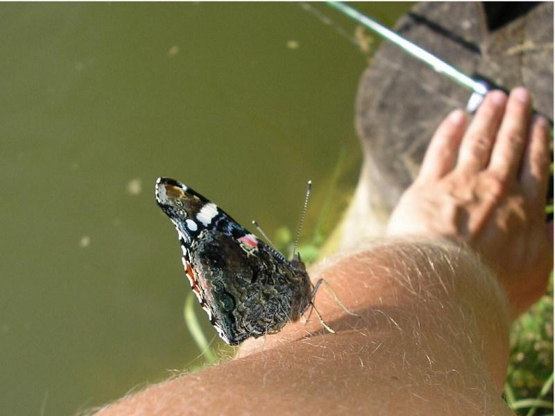 фото альбом Насекомые и растения Бабочка на руке