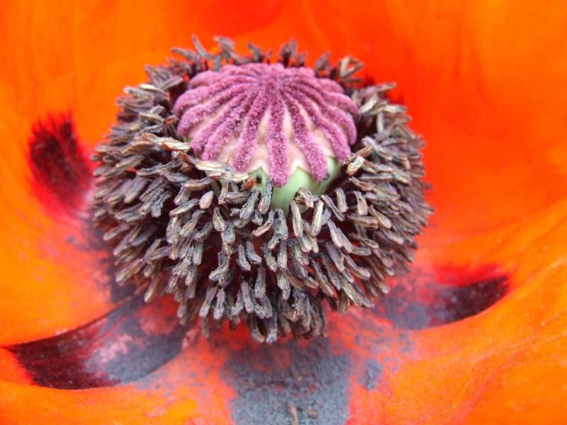 фото альбом Макро Цветы