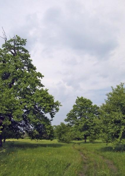 фото альбом Леса, озера - Природа Пейзажи, ландшафты