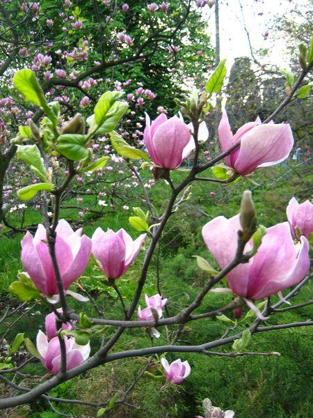 фото альбом Ботсад заканчивая цветение 2006 года