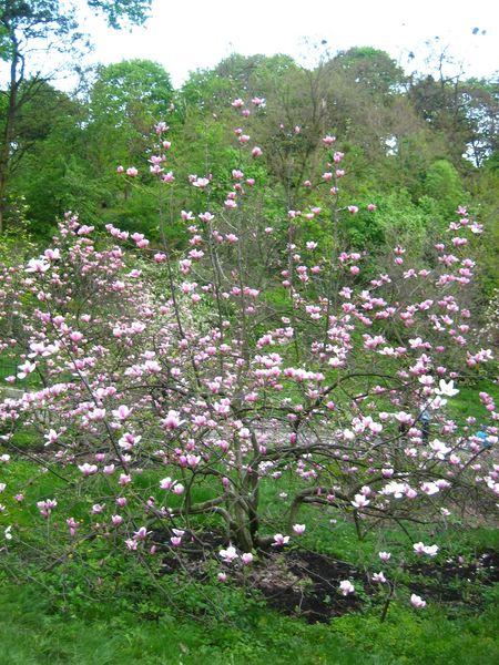 фотографии альбом Ботсад заканчивая цветение 2006 года