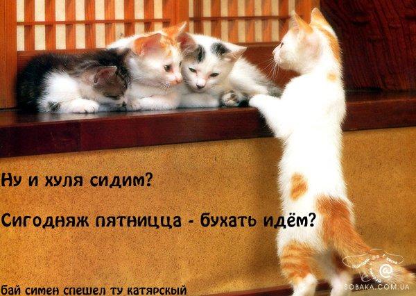 фото альбом КОТЯТА прикольные фотографии котят