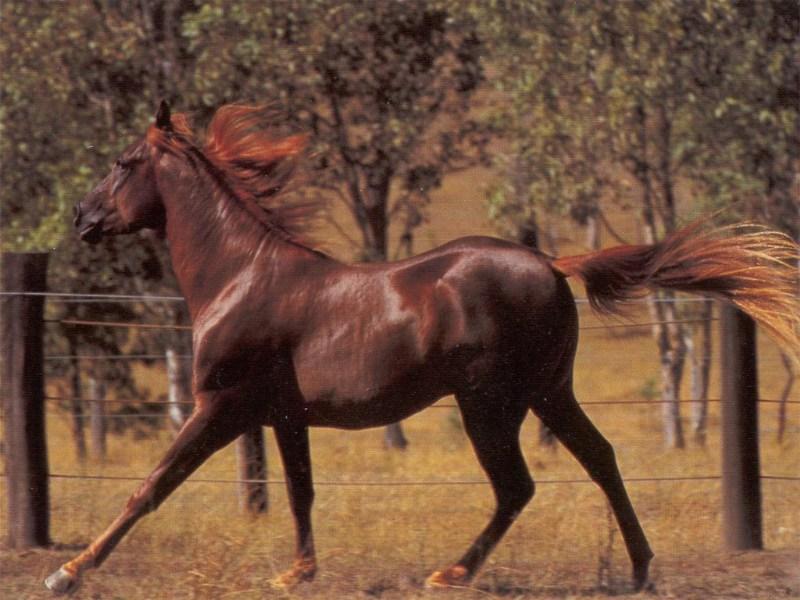 фотографии альбом Wallpapers - животные (медведи, лошади, дельфины, коты и др.) Лошади, обои