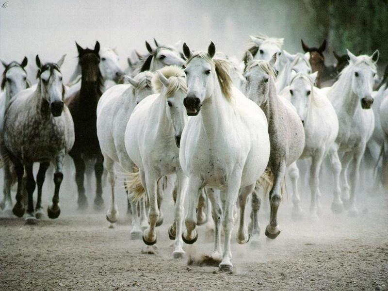фото альбом Wallpapers - животные (медведи, лошади, дельфины, коты и др.) ВСЕ ФОТО КАСЕСТВОМ НЕ НИЖЕ 1024х768!!! ОЧЕНЬ ХОРОШИЕ РАБОТЫ