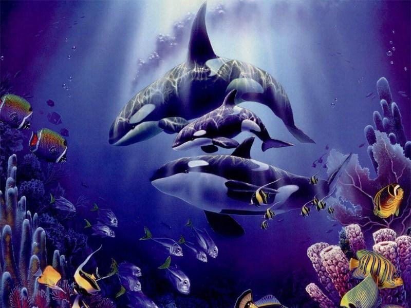 фото альбом Wallpapers - животные (медведи, лошади, дельфины, коты и др.) Wallpaper дельфины